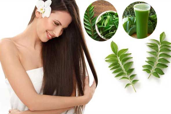 15 Amazing Health Benefits of Curry Leaves