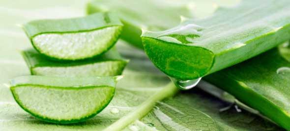 Aloe Vera to Cure Dry Skin
