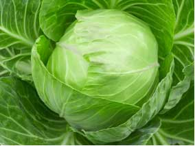 Drink cabbage soup to derive potassium benefits on the body