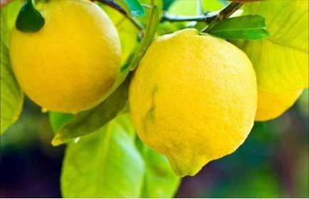 Keep A Lemon With You