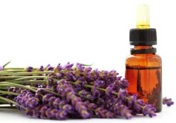 Lavender oil Moisturizes The Skin