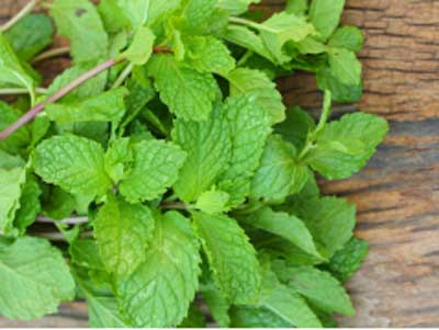 Mint leaves dissolves the belly fat fast
