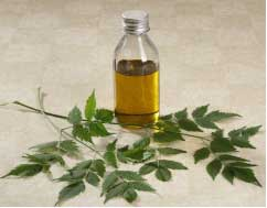 Neem is a natural pesticide and it kills lice within few hours