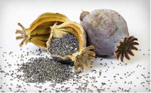 Poppy seeds helps in bringing in good sleep