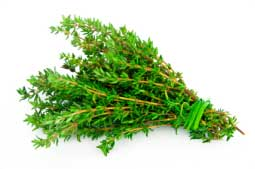 Strong herbal infusion of thyme treats lice in an effective way