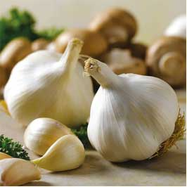 Strong smell of garlic helps in killing lice