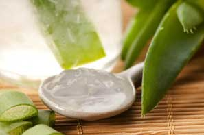 Aloe Vera is a natural moisturizer for the skin