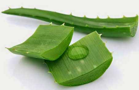 Aloe Vera Remedy for Removal of Scars