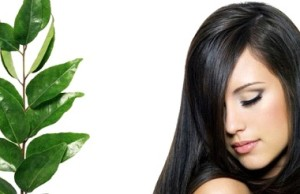 Hair benefits of curry leaves