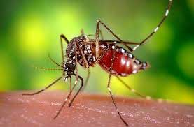 Health Risks Related to Mosquitoes