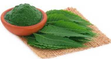 Margosa leaves-Natural home remedies to get rid of chin acne