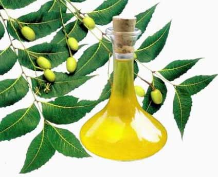 Neem Oil or Neem Leaves