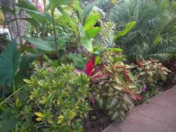 Select Heat Tolerant Plants to keep House Cool