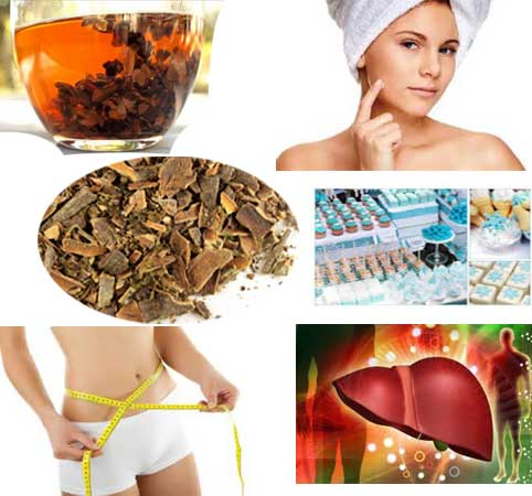 Top Health Benefits of Cascara Sagrada