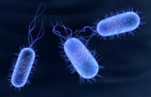 Typhoid Disease