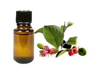 Wintergreen oil-