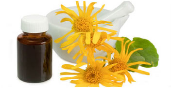 Arnica Oil Natural Muscle Relaxer