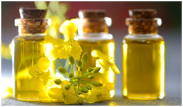 Rapeseed oil has healthy mono saturated fats that keeps body healthy