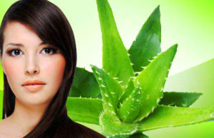 Aloe Vera for Hair treatment