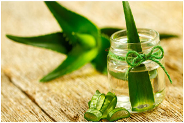Aloe vera helps in boosting the hair growth and repairs damaged cells