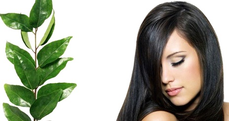 Amazing Benefits of Curry Leaves for Your Hair