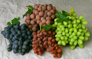 Amazing Health Benefits of Grapes