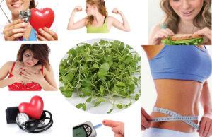 Impressive Health Benefits of Eating Watercress
