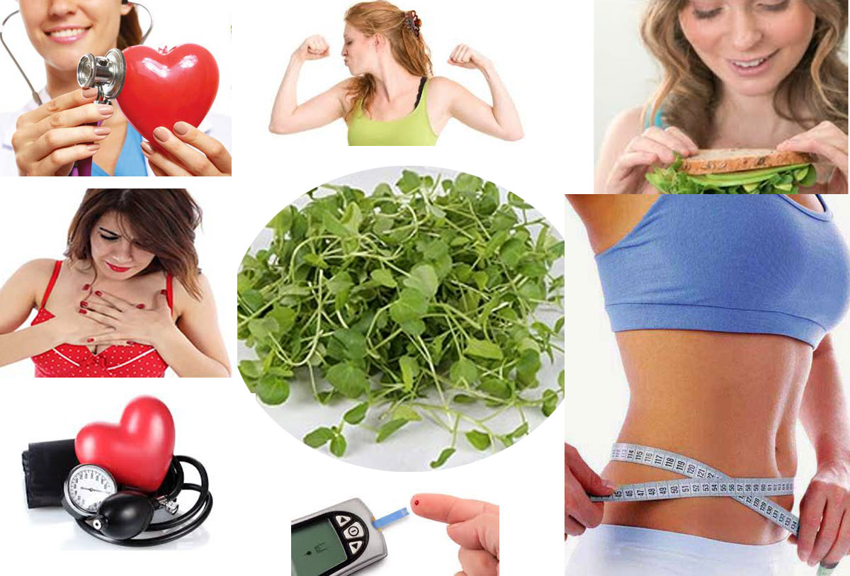 Impressive Health Benefits of Eating Watercress