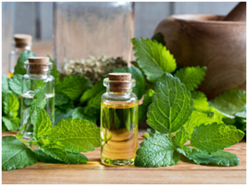 Lemon balm soothes your skin and keeps sores at bay