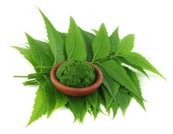 Neem leaves are antibacterial in nature that helps in keeping plaque at bay