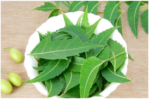 Neem is an antiseptic that prevents bacteria growth on the skin