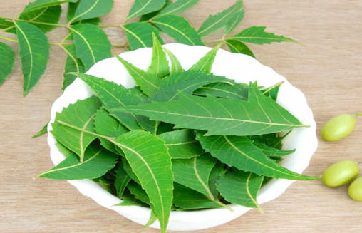 Neem Home Remedy For Scabies