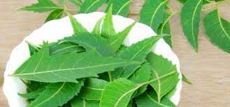 Neem has antiseptic properties that treats blemishes
