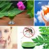 8 Incredible Health Benefits Of Papaya Leaf