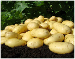 Potatoes helps in lightening the skin and keeps irritation as well