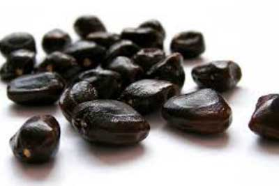 What Is Tamarind Seed