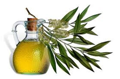 Tea Tree Oil to Cure Dandruff